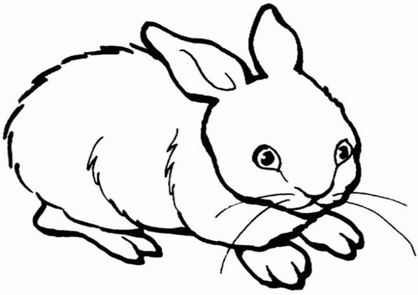 un conejo para imprimir y pintar