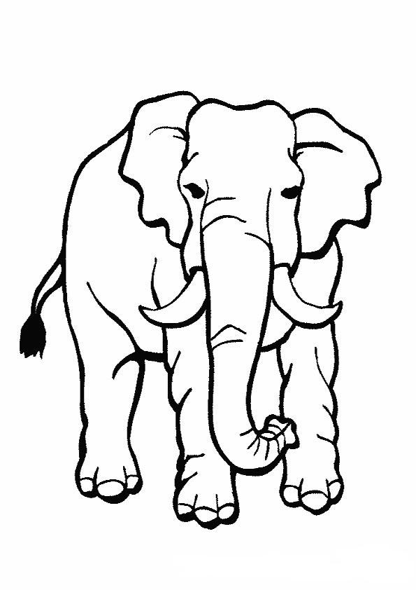 elefante africano para colorear  Dibujos para colorear - Dibujos para