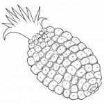 Frutas 12