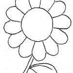 Flores 11